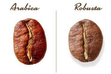 Robusta vs. Arabica